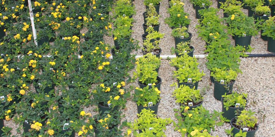 Available New Earth Nursery Container Mix Selections