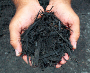 black dyed mulch in hands close up