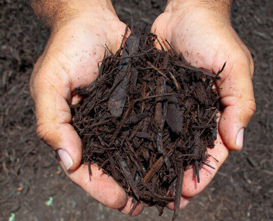brown dyed mulch in hands close up