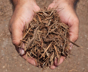 double shredded native mulch in hands close up