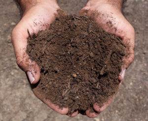 enriched topsoil in hands close up