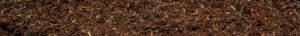 close up wide shot of fresh pine bark