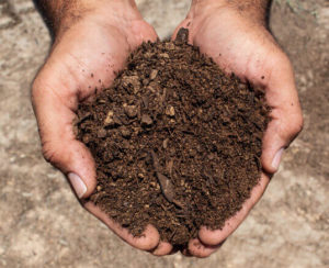 garden soil in hands close up