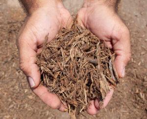 kiddie cushion mulch in hands close up