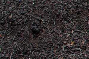 close up of leaf mold compost