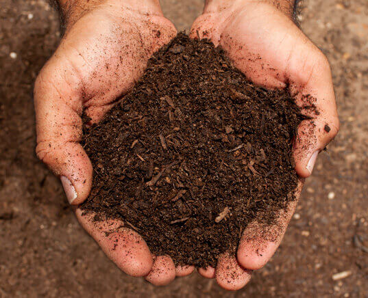 manure compost in hands close up