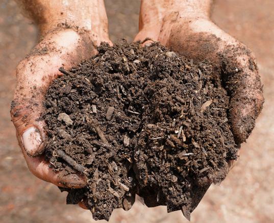 mushroom-compost-hand
