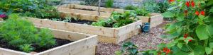 new-earth-conroe-compost