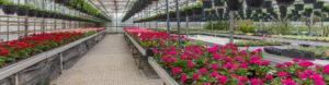new-earth-nursery-potting-soils