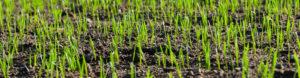 new-earth-soil-blends
