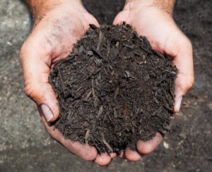 potting soil in hands close up