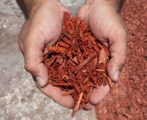 red dyed mulch in hands close up