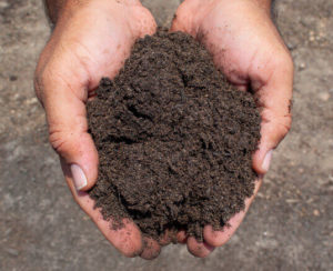 topdressing in hands close up
